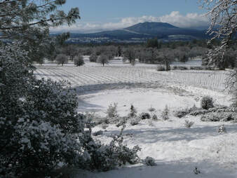 Photo of the snow-covered vineyard taken from the hillside above.