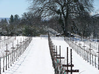 Photo of the vine rows in winter with the ground covered in snow.